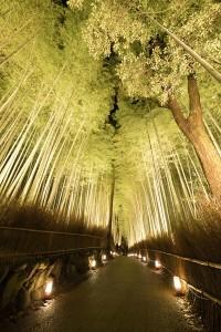4.竹林の小径ライトアップ__DSC5227