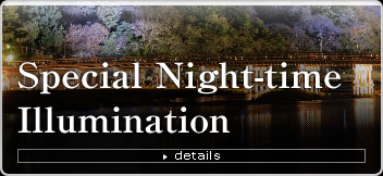 Special Night-time Illumination